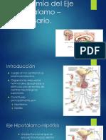 Anatomía Del Eje Hipotálamo Hipofisario
