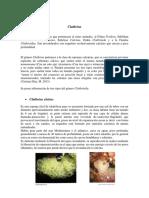 Ejemplos de Cnidarios.docx