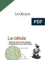 3.1 Organelos_celulares (1).ppt