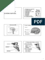 Anatomie Fonctionnelle Du Système Nerveux.pdf