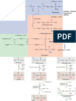 AA Biosynthesis