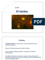 Clase 12 - Nucleo
