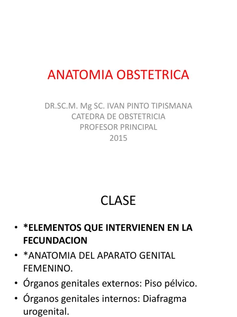 Anatomia Obstetrica 1_ Parte