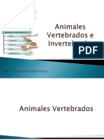 3 C Animales Vertebrados e Invertebrados