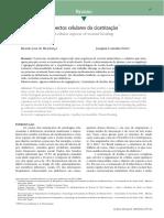 2.6 - Artigo de Mecanismo de Reparo Tecidual.pdf