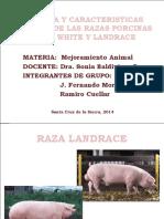 HISTORIA Y CARACTERISTICAS RACIALES DE LAS RAZAS PORCINAS.pptx