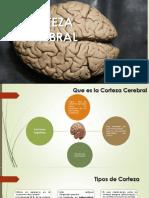 Corteza neuropsicologia 2017.pptx