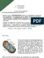 ClaseIIbis (2)