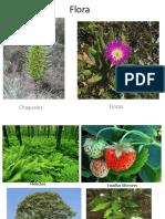 Flora y Fauna de La Region Del Bio Bio