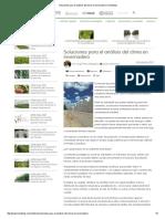 Soluciones Para El Análisis Del Clima en Invernadero _ Hortalizas