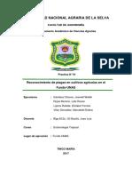 Reconocimiento de plagasPRACTICA N°01