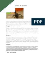 Partes de Una Antena de Insectos