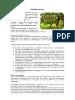 Árbol de Manzano