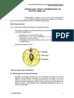 FUNCIONES, MORFOLOGÍA, TIPOS Y DISEMINACIÓN DE FRUTOS.pdf