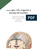 Meninges, LCR, irrigación y drenaje