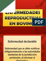 ENFERMEDADES BOVINO Y OVINOS EXPO.pptx