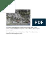 Litología y estructura.docx