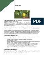 Come Coltivare Limoni in Vaso