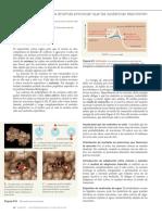 Enzimas (2) (1).pdf