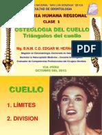 triangulos del cuello.pdf