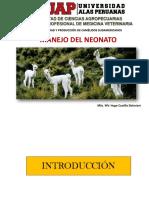 Neonatología en Alpacas