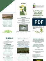 Triptico de Nopal.pdf