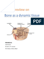 Bones as a Living Dynamic Tissue