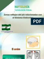 8542558 Reflexologia y Sistema Hormonal