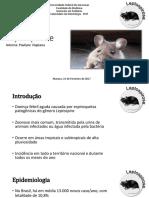 Leptospirose FMT