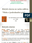 1 Botrytis cinerea 2016 - copia.pdf