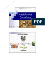 2. Metabolismo de Carboidratos