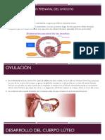 Fecundacion e Implantacion