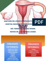 1. Anatomía Del Aparato Genital Femenino - Fernando Vázquez