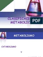 8.- Rutas Metabólicas