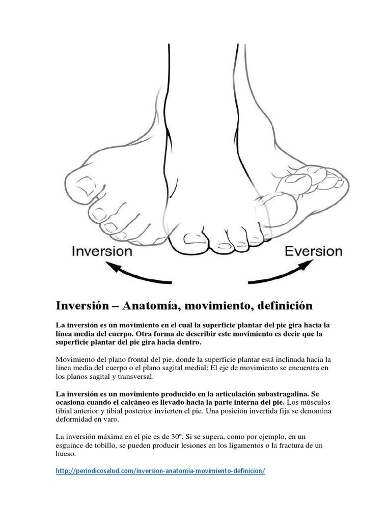 Encantador Definición Anatomía Transversal Friso - Imágenes de ...