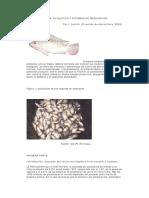 071201_Generalidades Acerca Del Cultivo (Parte 01)