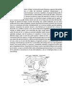 Desarrollo del intestino anterior.docx