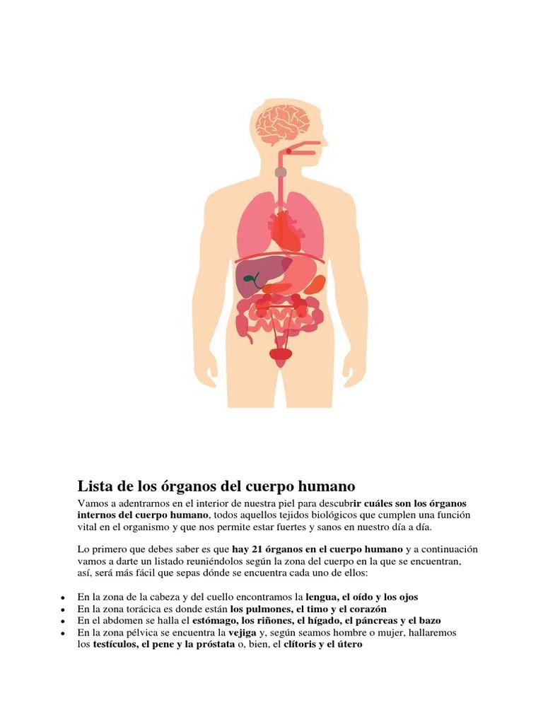 Lista de Los Órganos Del Cuerpo Humano