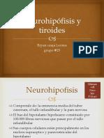 Neurohipófisis