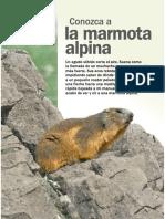 La marmota alpina