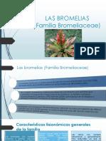 Las Bromelias