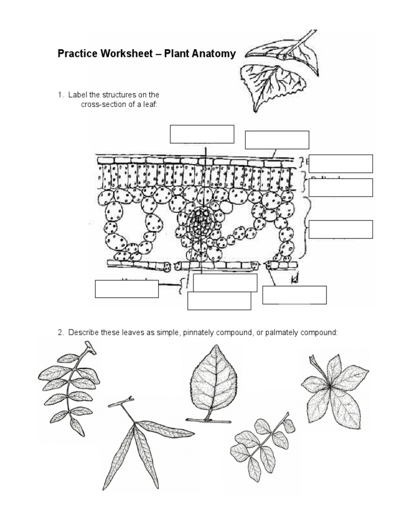 worksheet Plant Anatomy Worksheet plant anatomy petal stem