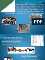 Metodos de la arqueologia.pptx