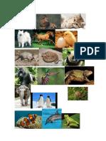 Animales Distintas Cubiertas