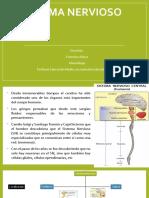 4.- Sistema Nervioso