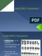 8va Clase Cariotipo Humano