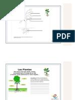 Las Partes de La Plantas