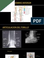 Articulacion Del Tobillo
