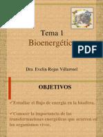 Bioenergética - Dra Evelin Rojas Villarroel