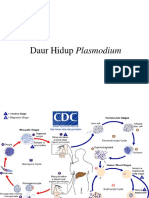 ETIOLOGI MALARIA.pptx